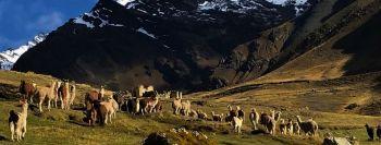 Miniatura Green Peru Adventures EIRL